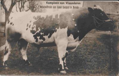 Een kampioen van Vlaanderen in Nevele