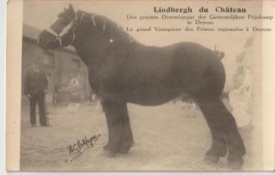 Lindbergh du Château wint gewestelijke prijskamp te Deinze