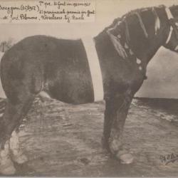 Robert de Baeygem