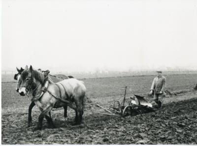 Paarden trekken de ploeg