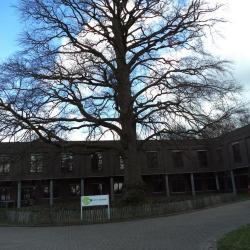 Oude boom op het domein Scheldevelde