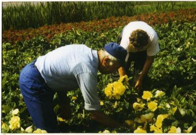 Aan het werk in het bloemenveld