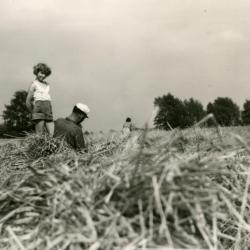 Het oogsten van stro