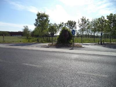 Restanten linde op hoek tussen Rekkelinge en Leernsesteenweg