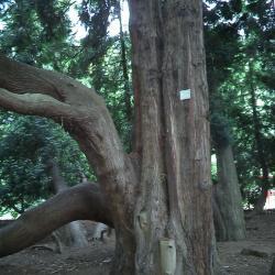 Levensboom op het domein Meheus