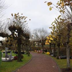 De leilinden die het Grammens kerkhof omringen